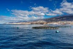 Le imprese di piscicoltura offshore hanno ragruppato intorno alla costa ovest di Tenerife, Spagna Il branzino e l'orata comune so Fotografia Stock Libera da Diritti