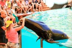 Le isole Canarie 12,09 2015 Mostri i delfini, balene, con la partecipazione della gente Tenerife Spagna Immagini Stock