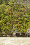 Le isole della foresta Fotografia Stock