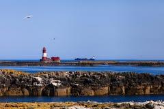 Le isole di Farne fotografie stock libere da diritti