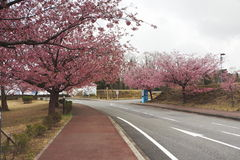 Le Japon Sakura Photographie stock libre de droits