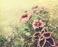 Le jardin étonnant fleurit au-dessus du fond brouillé de nature, fin  Photos stock