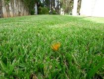 Le jardin Image stock