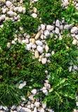 Le jardin blanc d'été de fond de texture de pierres de caillou de granit léger multicolore de coucher du soleil dreen l'herbe d'h photographie stock