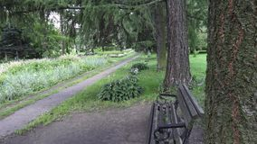 Le jardin botanique à Vitebsk banque de vidéos