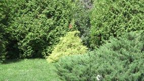 Le jardin botanique à Vitebsk clips vidéos