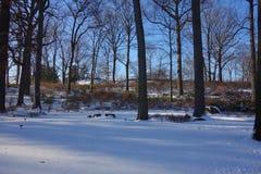 Le jardin botanique 4 de New York Photo libre de droits