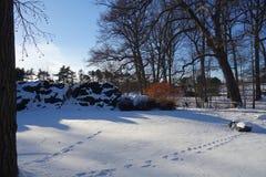 Le jardin botanique 6 de New York Images libres de droits