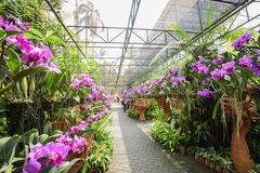 Le jardin botanique tropical de NongNooch Photo libre de droits