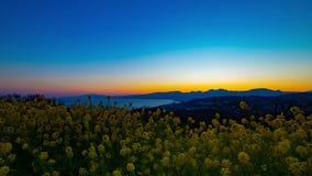 Le jardin d'agr?ment de Canola de laps de temps de coucher du soleil au parc d'Azumayama dans Shounan Kanagawa a au loin tir? le  banque de vidéos
