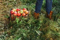 Le jardin d'homme rassemblent les pieds rouges de bottes de boîte de jambe de récolte de propriétaire de travailleur de propriéta photographie stock