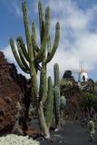 Le jardin de cactus en île de Lanzarote en Îles Canaries Photographie stock libre de droits