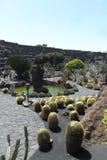 Le jardin de cactus en île de Lanzarote en Îles Canaries Photos libres de droits