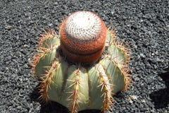 Le jardin de cactus en île de Lanzarote en Îles Canaries Images stock