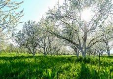 Le jardin de floraison photo libre de droits