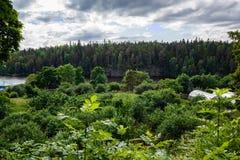 Le jardin de fruit de l'île, respectivement, pommiers à 120 ans Image libre de droits