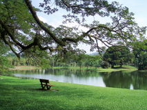 Le jardin de lac, Taiping Images stock