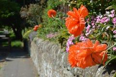Le jardin de mur Photos stock