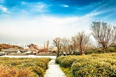 Le jardin de thé de flanc de coteau Image stock
