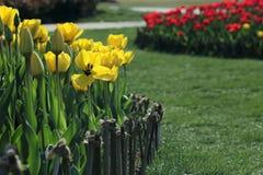 Le jardin de tulipe Photographie stock