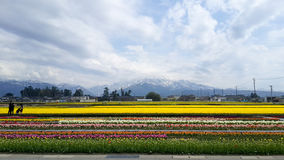 Le jardin de tulipe au Japon à nyuzen Photo stock