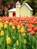 Le jardin des tulipes Images stock