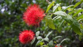 Le Jardin Du Roi Spice Garden Seychelles Stock Photo