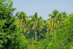 Le jardin est entouré par des arbres de noix de coco Photographie stock libre de droits