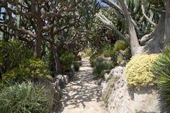 Le jardin exotique du Monaco Images libres de droits