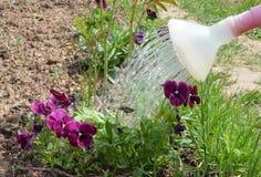 Le jardin, faisant du jardinage, usine, fleur, nature, arrosant, vert, ressort, fleurs, peut, été, pot, l'eau, boîte d'arrosage,  Images stock