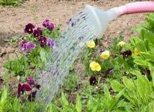 Le jardin, faisant du jardinage, usine, fleur, nature, arrosant, vert, ressort, fleurs, peut, été, pot, l'eau, boîte d'arrosage,  Photographie stock libre de droits