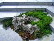 Le jardin fait un pas accent vert de groundcovers Image libre de droits