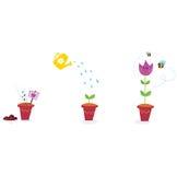 Le jardin fleurit des étapes d'accroissement - tulipe Image stock