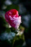 Le jardin fleurit en automne avant la première neige images stock