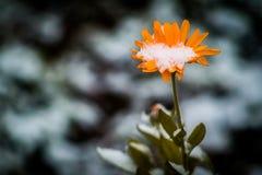 Le jardin fleurit en automne avant la première neige images libres de droits