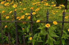 Le jardin fleurit la barrière de fer travaillé de vintage Images stock