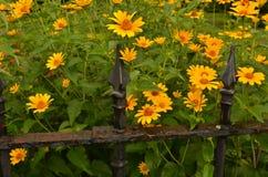 Le jardin fleurit la barrière de fer travaillé de vintage Photo libre de droits