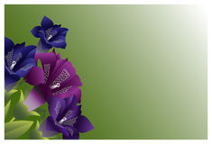 Le jardin fleurit la couleur de claret Photos libres de droits