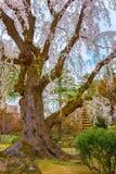 Le jardin japonais commémoratif de Fujita dans Hirosaki, Japon images libres de droits