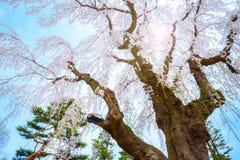 Le jardin japonais commémoratif de Fujita dans Hirosaki, Japon images stock