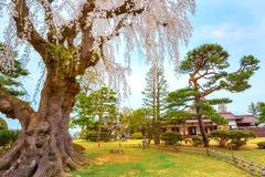 Le jardin japonais commémoratif de Fujita dans Hirosaki, Japon photographie stock