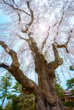 Le jardin japonais commémoratif de Fujita dans Hirosaki, Japon photos stock