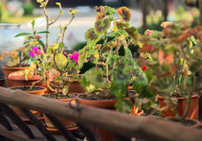 Le jardin a jeté les fleurs mises en pot colorées d'usines Image libre de droits