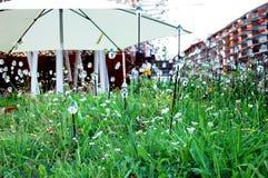 Le jardin moderne photo stock