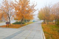 Le jardin public pendant l'automne de brume Photo stock