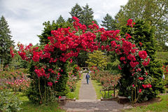 Le jardin rose d'essai Photographie stock
