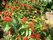 Le jardin rouge images stock