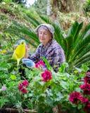 Le jardinage stimule l'esprit et le corps de la femme adulte supérieure photographie stock libre de droits