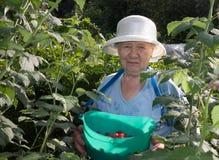 Le jardinier Photo libre de droits