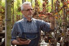 Le jardinier adulte inspecte les usines dans le magasin de jardin Dans les verres avec une barbe photo stock
